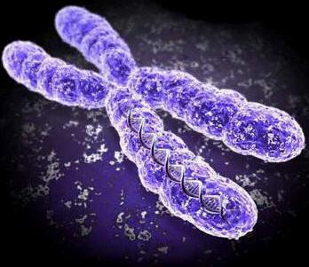 ADN et généalogie ascendante